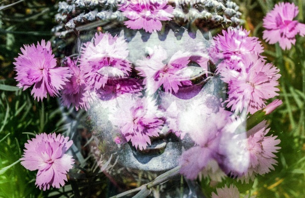 buddhawithflowers